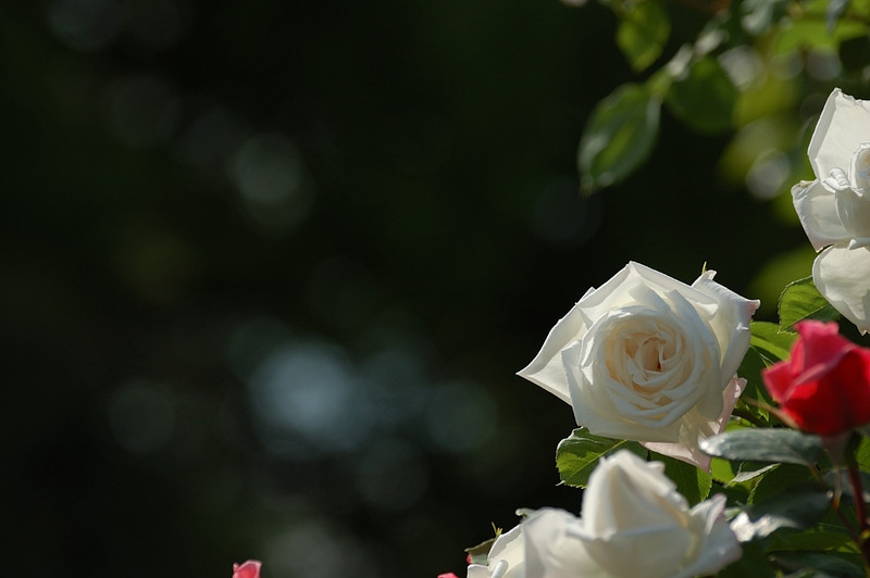 20120512_024